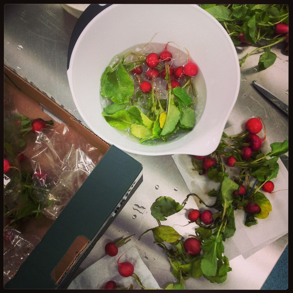 Reviving radishes by Stacy Grant