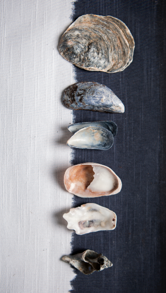 Stacy Grant Sea Shells